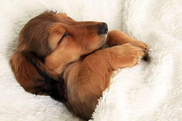 dog-sleeping-bed-funny-104__605
